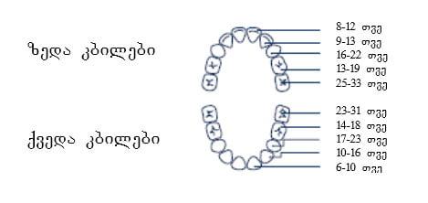 კბილები